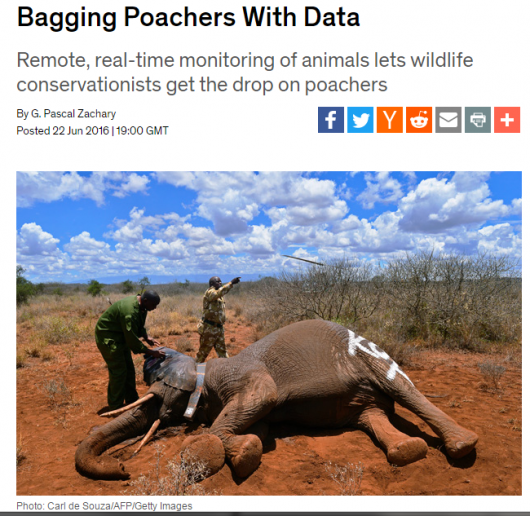 ElephantPoachers